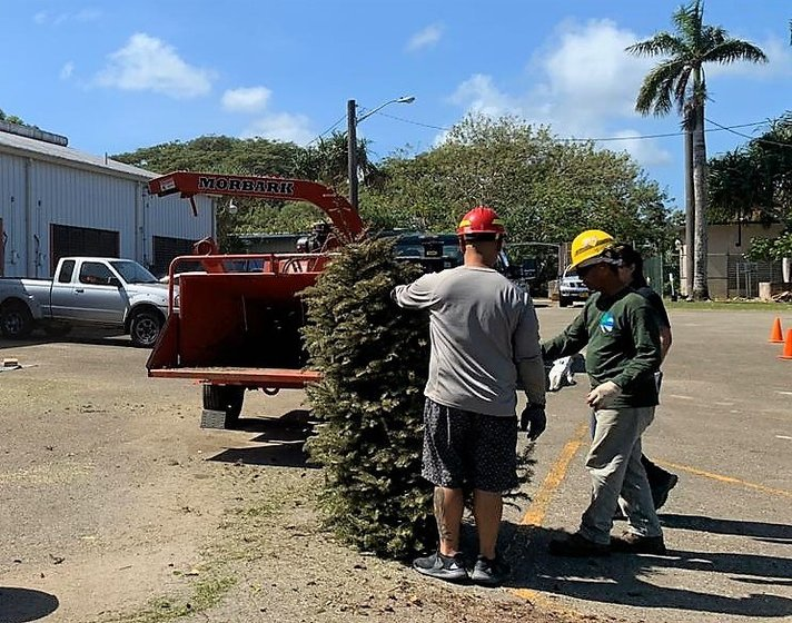 Don't burn your Christmas tree, bring it to Dept. of Agriculture